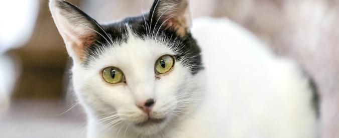 """Roma, donna ruba il gatto dei vicini e viene assolta: """"Il fatto è di lieve entità"""""""