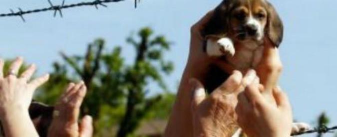 Green Hill, la Cassazione chiude la vergognosa vicenda dei beagle. Ma non basta