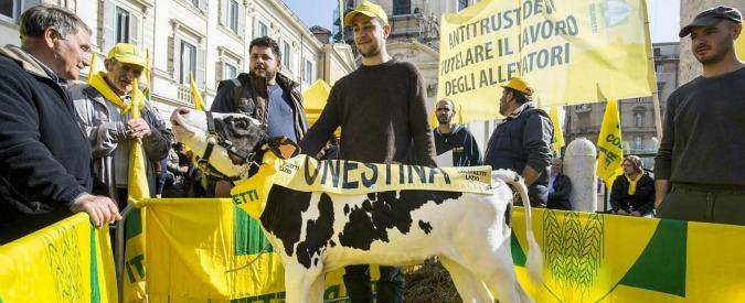 Latte, dopo proteste governo vara fondo da 55 milioni. Lactalis sospende il ritiro