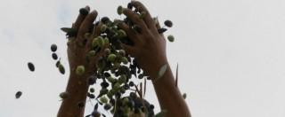 Olio d'oliva extravergine o contraffatto: il confronto tra costi al pubblico e profitti per il produttore (onesto o truffatore)