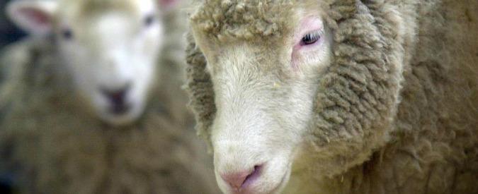 Roma, firmato il protocollo tra il Comune e la Coldiretti per le pecore tosaerba: coinvolti 20 parchi a vocazione agricola