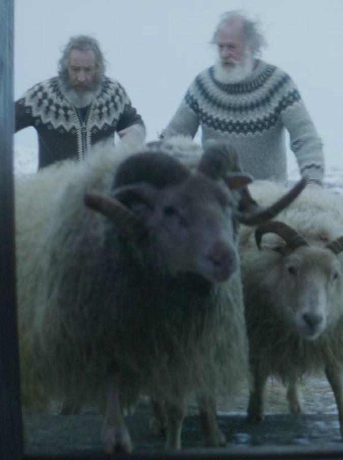 Rams – Storia di due fratelli e otto pecore:  la chicca cinematografica islandese, premiata a Cannes