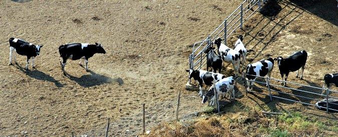 Cina, apre la più grande fabbrica di animali clonati. Obiettivo? Abbassare costi della carne da macello