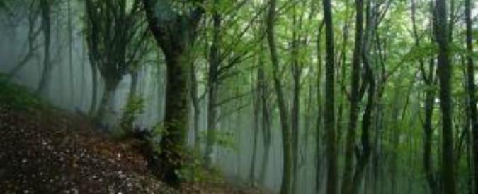 """Novara, cadavere trovato nel bosco. Arrestato l'assassino: """"Non volevo ucciderlo, era il mio migliore amico"""""""