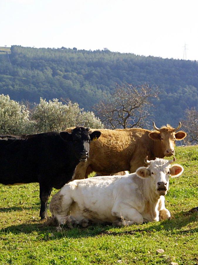 """India, """"pagnottelle"""" di cacca di mucca vendute on-line. L'ultima trovata di Amazon e eBay è già un successo"""