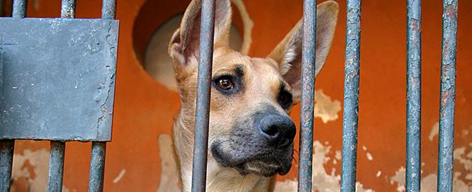 """""""Macellava cani in garage e li serviva nel suo ristorante cinese"""". Ma è una bufala. Ecco gli altri casi più clamorosi"""