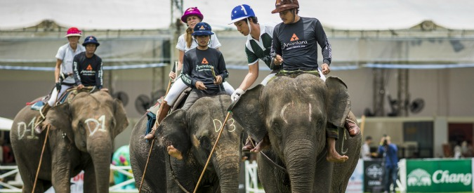 Europei di calcio, Olimpiadi di Rio ma non solo: nel 2016 anche i mondiali di curling, di snooker….e di polo su elefante