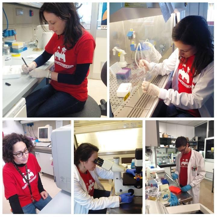 Attività di laboratorio all'Ospedale Careggi, Università di Firenze