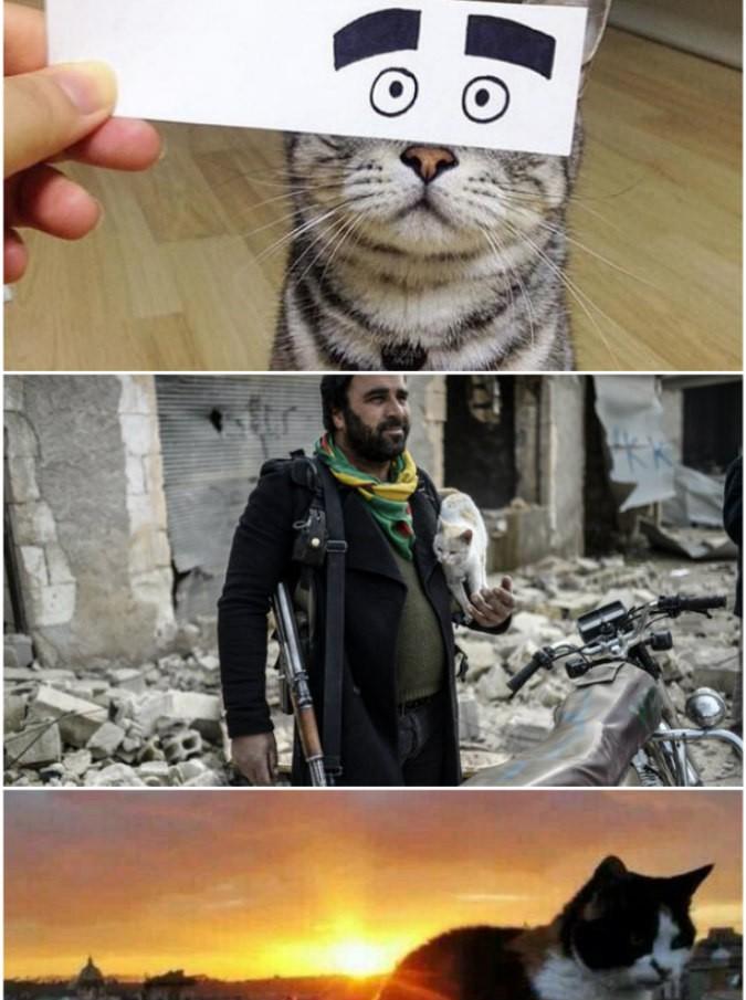 gatti-mondiale-675