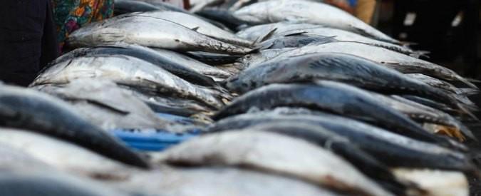Inquinamento da mercurio nel pesce: come difendersi? La parolina magica è solo una
