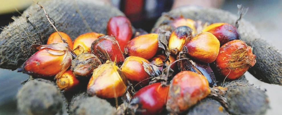 Disboscamento e grassi saturi: tutta la verità sull'olio di palma