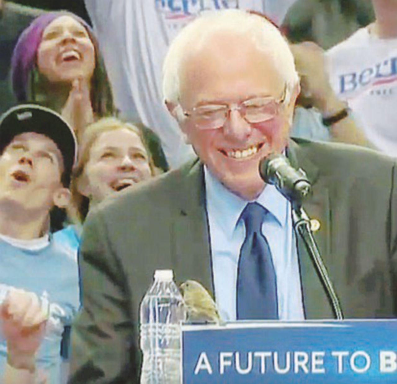 L'uccellino di Sanders