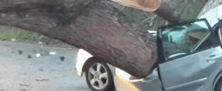 Roma, albero cade su un'auto ad Ardea: morti 2 uomini e ferita grave una donna
