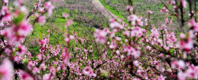 """Equinozio di primavera, quest'anno è anticipato: inverno finito il 20 marzo e non 21. """"Sarà così fino al 2102″"""