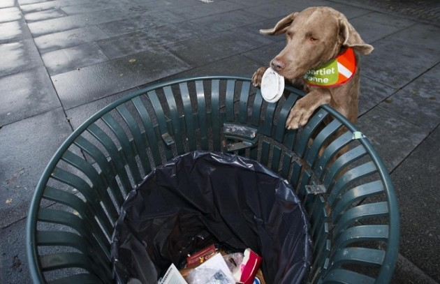 Ridder il cane spazzino di Oslo