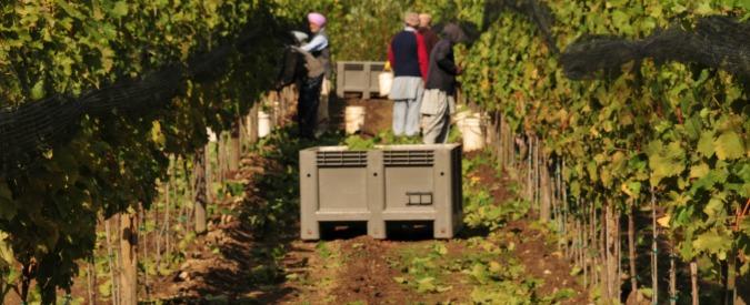 Pavia, aperti rubinetti cantina Vistarino: persi 5300 ettolitri di vino. 'Intimidazione'
