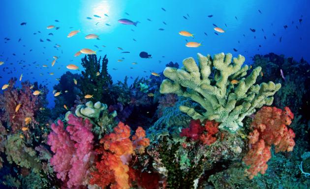 barriera corallina 3