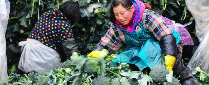 Coldiretti, blacklist dei cibi contaminati: broccoli dalla Cina e fragole dall'Egitto