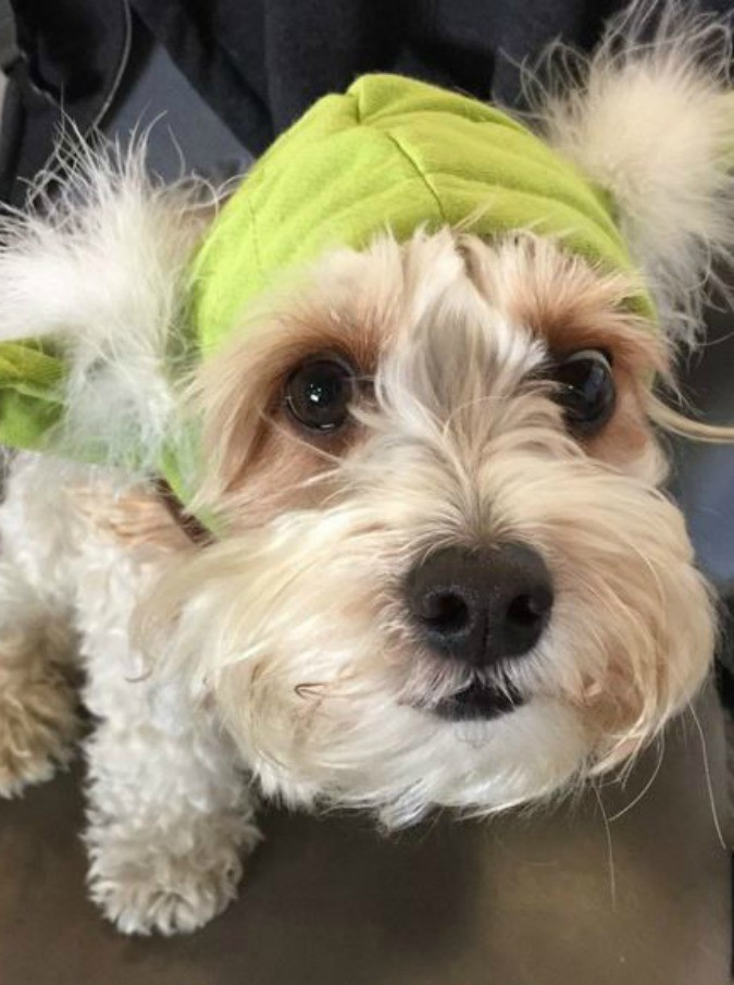 In viaggio con il cucciolo: in aereo i cani potranno stare in cabina col proprio padrone