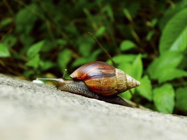 snail-1249053_960_720
