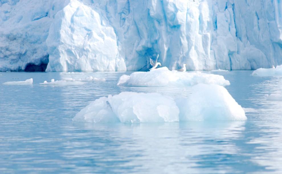 Gabbiani su un piccolo iceberg