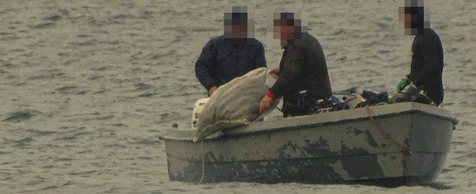 Oloturie, non c'è limite alle stragi animali. Ora tocca ai cetrioli di mare