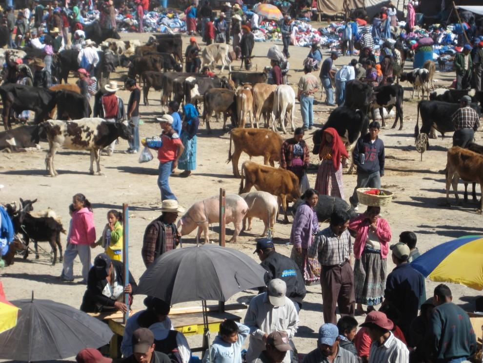 Un mercato del bestiame