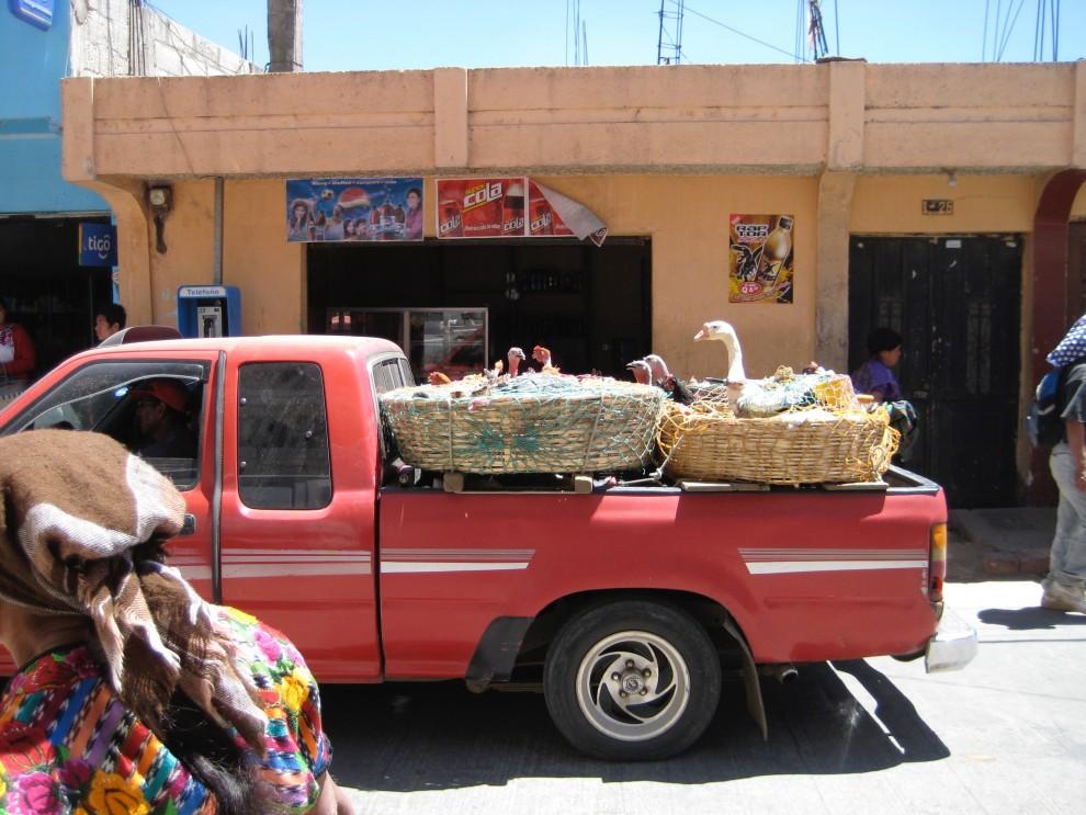 Volatili in viaggio verso un mercato