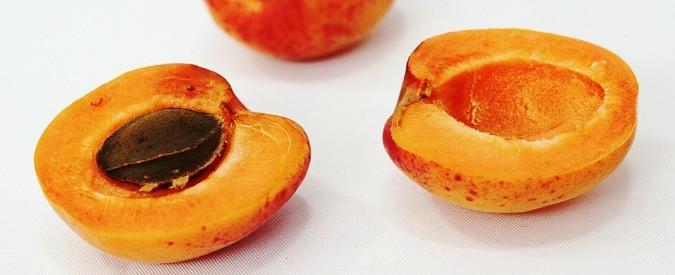Alimenti, attenti a quei semi di albicocca