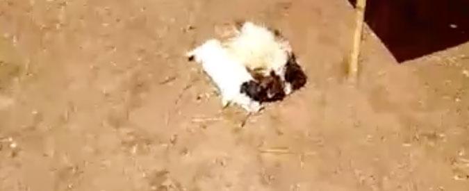 Venezia, doppio raid nell'oasi Sos Natura: centinaia di animali decapitati e massacrati a colpi di scarpone