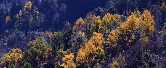 Decreto foreste, qualcuno valuti i reali costi e benefici