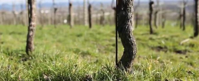 Glifosato, le 7 cose da sapere su uno degli erbicidi più diffusi in agricoltura: cos'è, dov'è, i rischi, cosa dicono le ricerche - 6/7