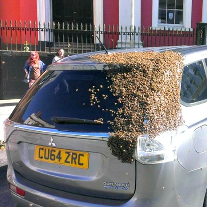 Un esercito di api attacca una Mitsubishi Outlander PHEV per liberare la Regina – VIDEO