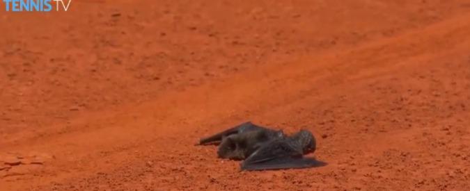 Wta Madrid 2016, l'invasore di campo è un pipistrello: Mayer lo soccorre