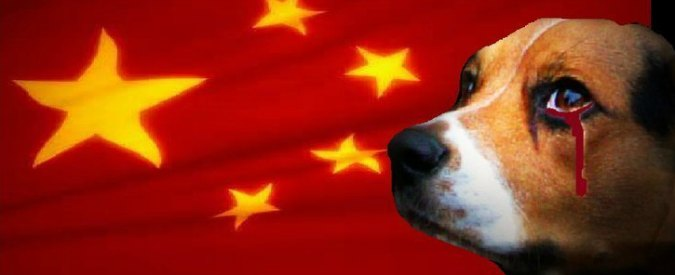 Cina, torna il festival della carne di cane. Due milioni e mezzo di persone firmano petizione per la chiusura