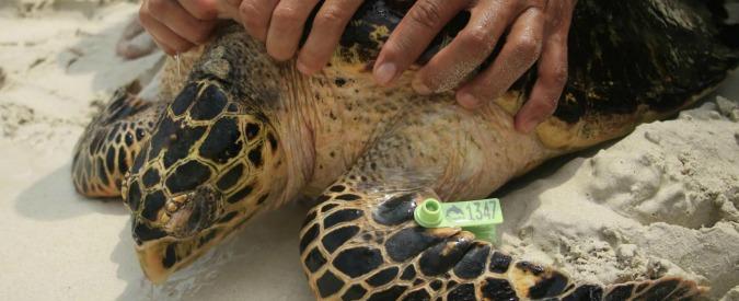 Giornata mondiale ambiente, iniziative anche in Italia per salvaguardare le specie a rischio estinzione