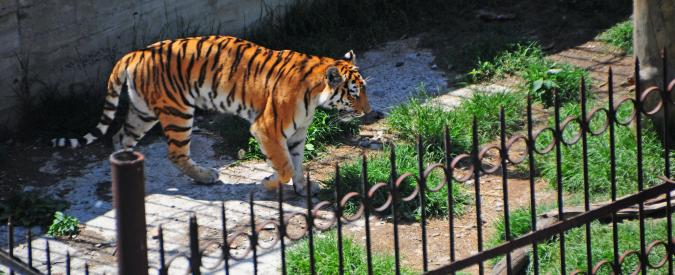 Zoo, che senso ha questa crudeltà gratuita?