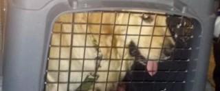 Marò, anche Argo è tornato dall'India. Il cane di Girone atterrato a Fiumicino
