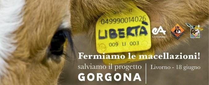 In piazza contro la macellazione degli animali dell'isola-carcere Gorgona
