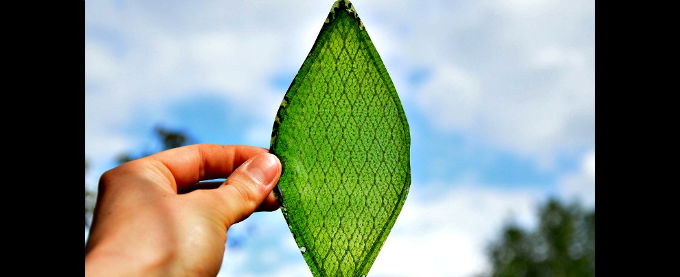 Carburanti alternativi, in futuro si potranno ottenere dalle foglie sintetiche