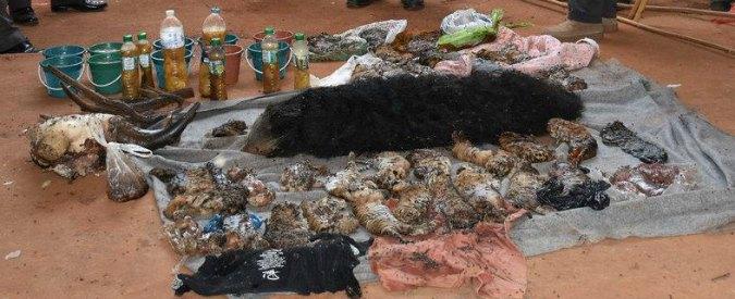 """Thailandia, 40 cuccioli morti in congelatore nel """"Tempio delle Tigri"""": monaci accusati di traffico di animali"""