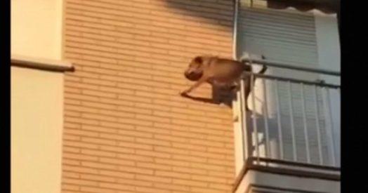 Ringhiere cani regali da cani anche per fido natale for Cancelletti ikea