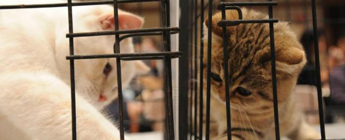 Animali, le associazioni di volontariato li tutelano davvero? La storia del gattino Sushi