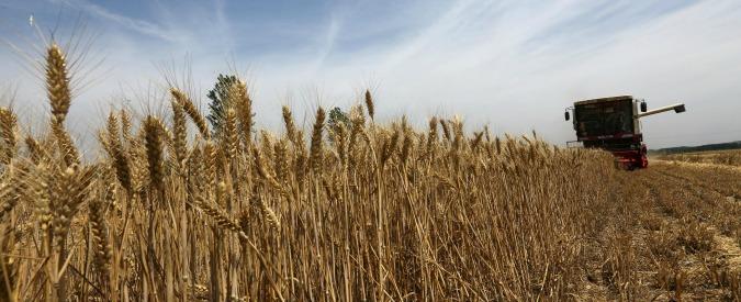 """Produzione grano, agricoltori contro industriali: """"Si accollino perdite. Stop ai prezzi da discount a causa dell'import"""""""