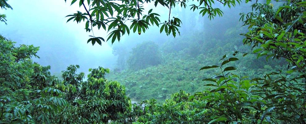 Toyota, accordo con il WWF per la tutela delle foreste asiatiche