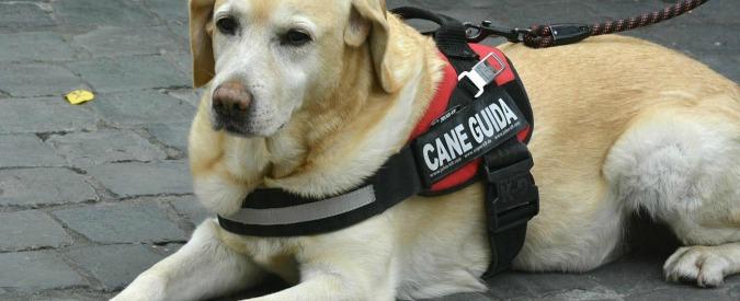 """Disabili, albergo vietato a una cieca accompagnata dal cane guida. Il motivo: """"Garantiamo ambiente senza animali"""""""
