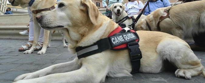 """Rimini, Confindustria Alberghi: """"Inaccettabile vietare hotel a cieca accompagnata da un cane guida"""""""