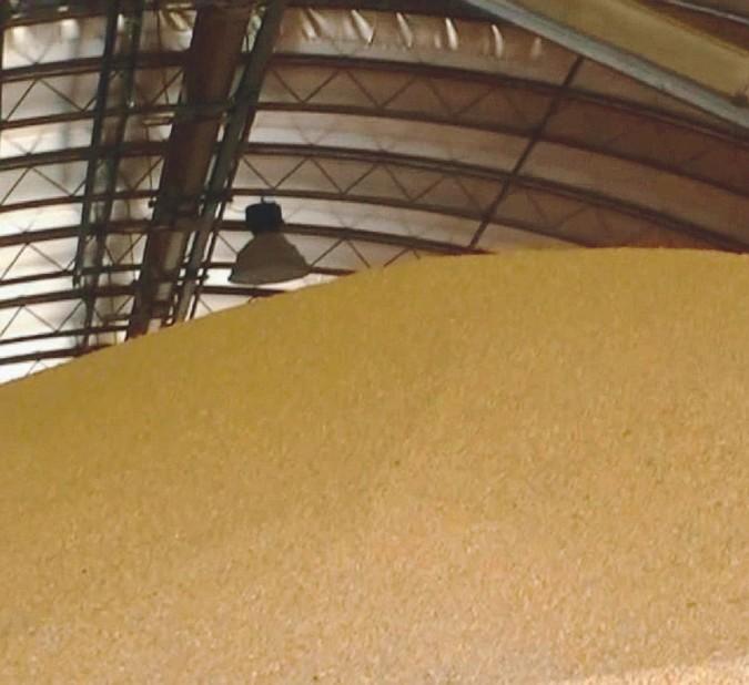 """""""Made in Italy"""", ma il grano viene da Ucraina e Messico"""