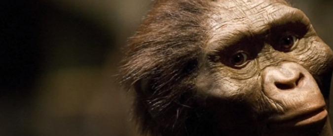 """L'antenata Lucy morì """"cadendo da un albero"""". Il più famoso ominide sapeva """"camminare eretta e perfino correre"""""""