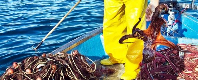 Anche i pesci sono esseri senzienti, emotivi, socialmente complessi. Stop alla pesca intensiva